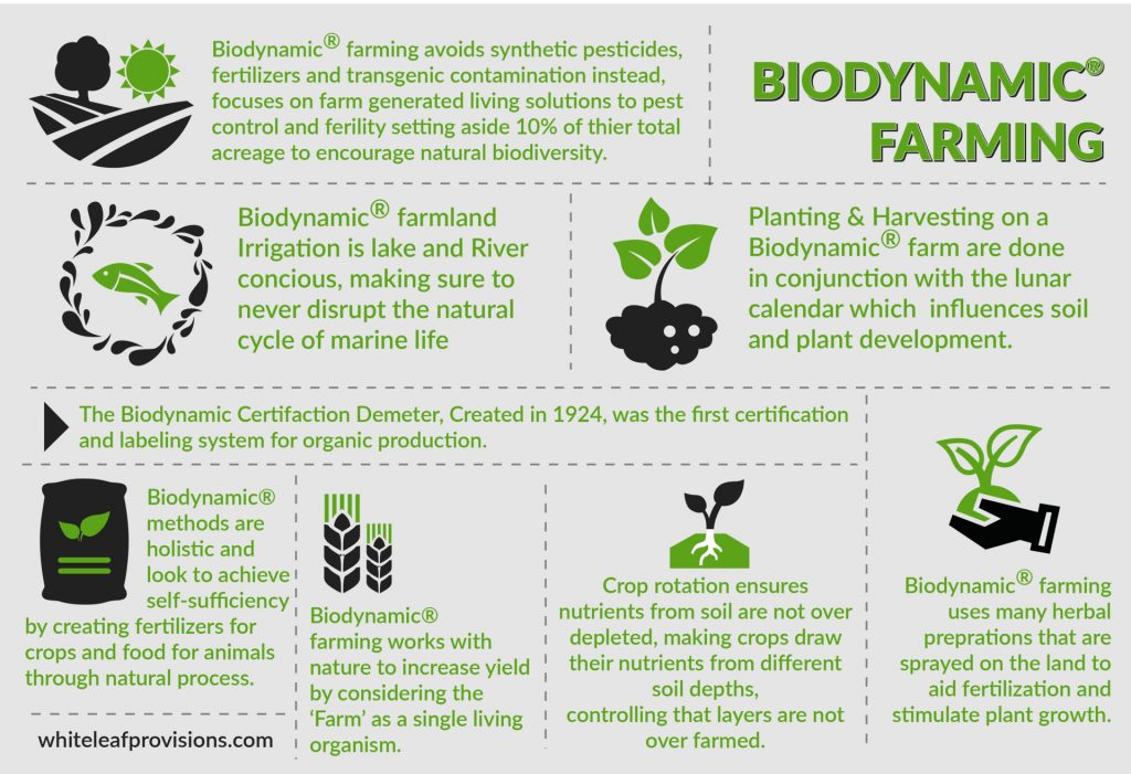 Biodinamic Farming Infographic